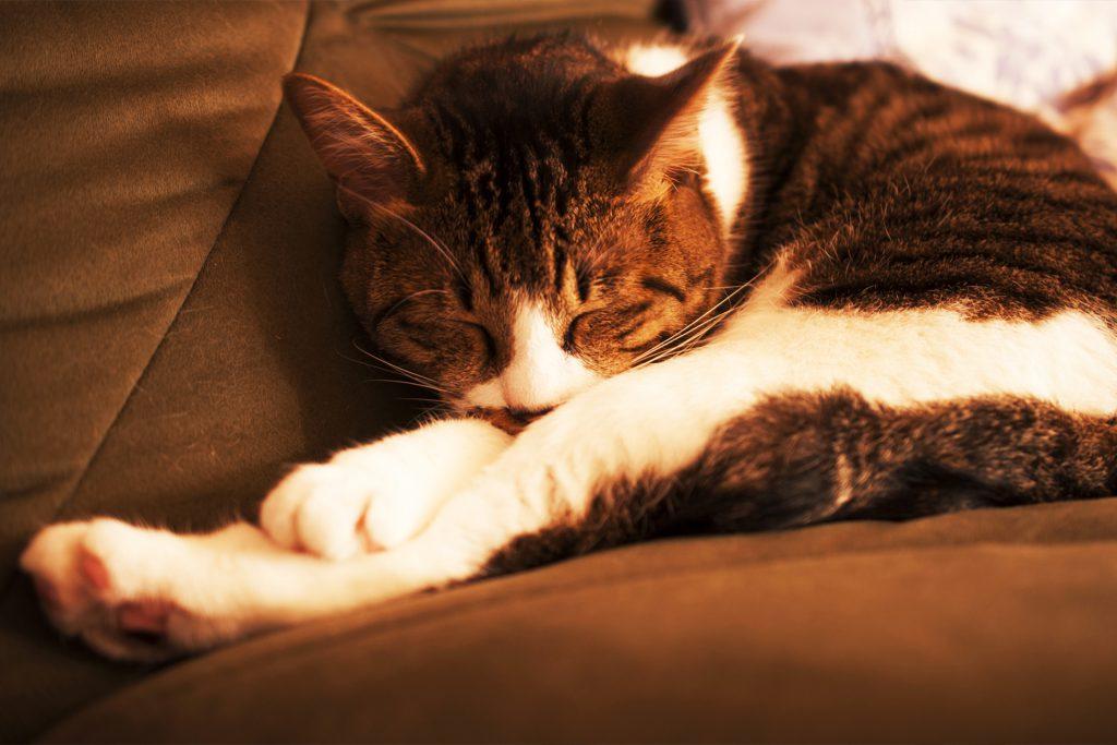 株式会社サキヤマデザインの写真サンプル 猫